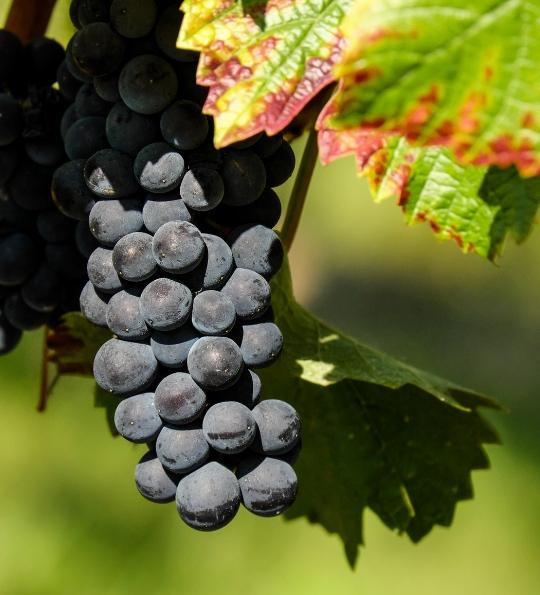 Vins Primeurs 2018Achetez vos vins avant l'embouteillage et bénéficiez du meilleur tarif